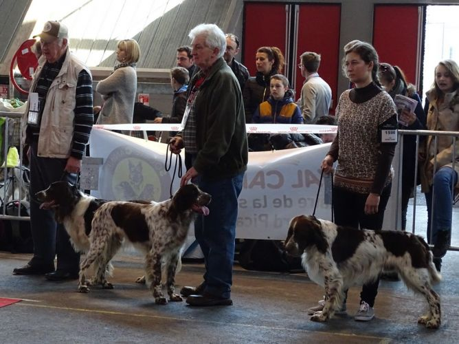centrale canine amiens