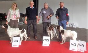 Exposition Canine Internationale de Bordeaux