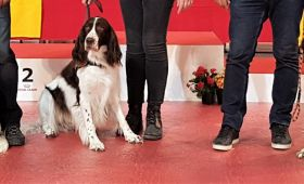Expositions Canine Internationale de Martigues (13) et Monaco (98)