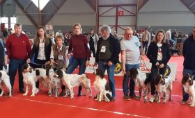 Exposition Canine Internationale d'Amiens (80)
